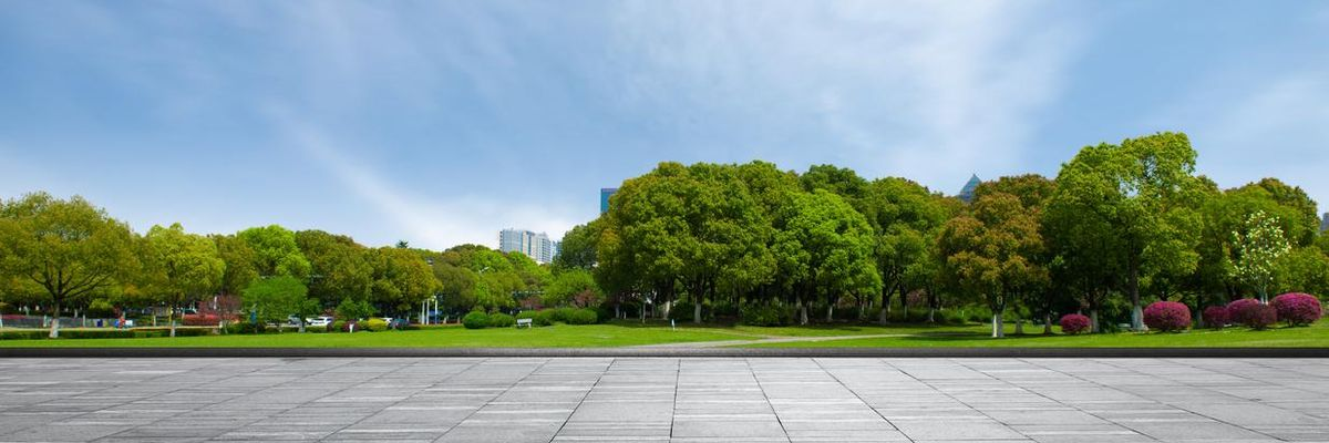 Il nuovo bosco urbano di Torino, a cura di Arbolia e Rina