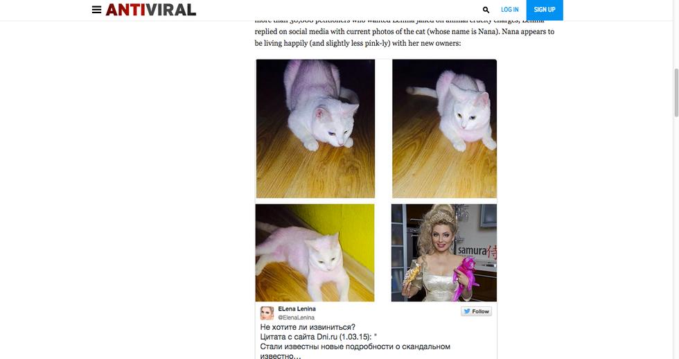 Il gatto rosa è vivo