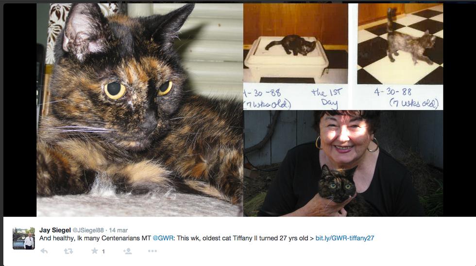 Addio a Tiffany II, la gatta più anziana al mondo