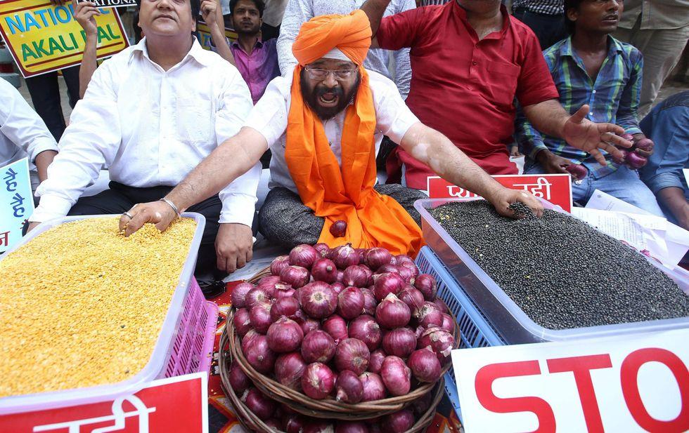 india cipolle