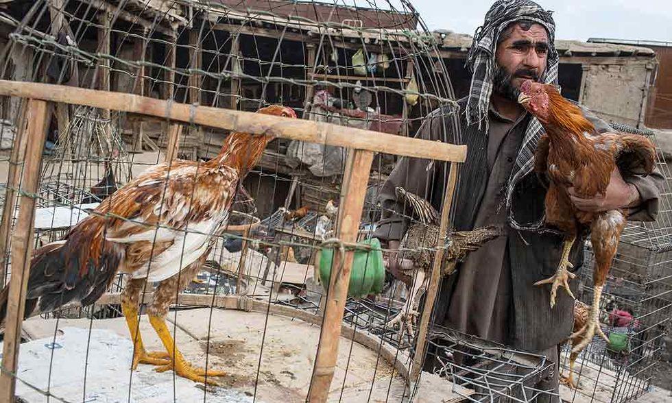 Il mercato degli uccelli di Kabul