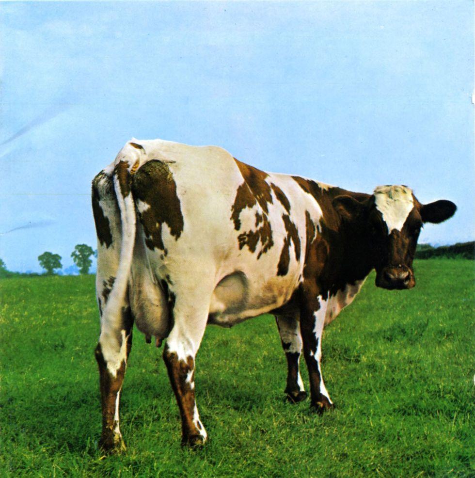 "Pink Floyd Legend: uno show a Roma per i 45 anni di ""Atom Heart Mother"""