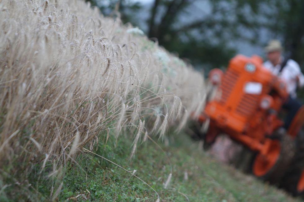 Agricoltura piegata dalla siccità: un miliardo di danni
