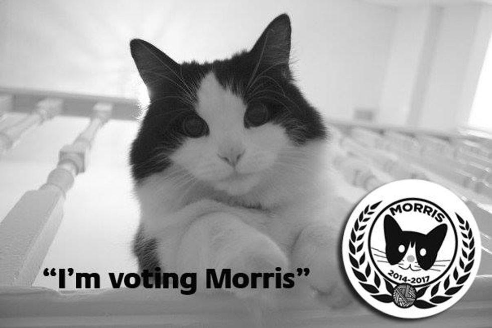 Messico: il gatto candidato sindaco
