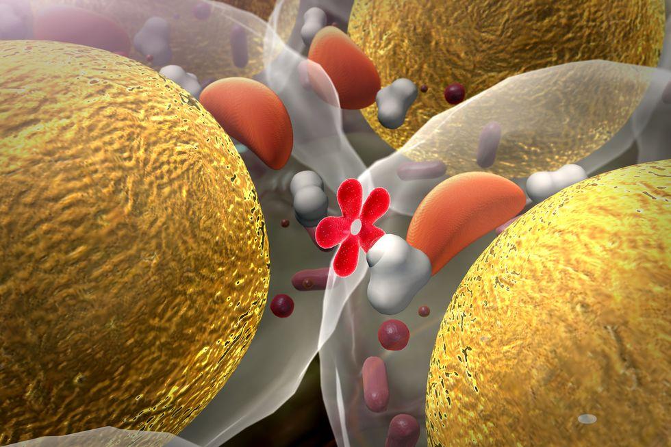cellule-di-insulina