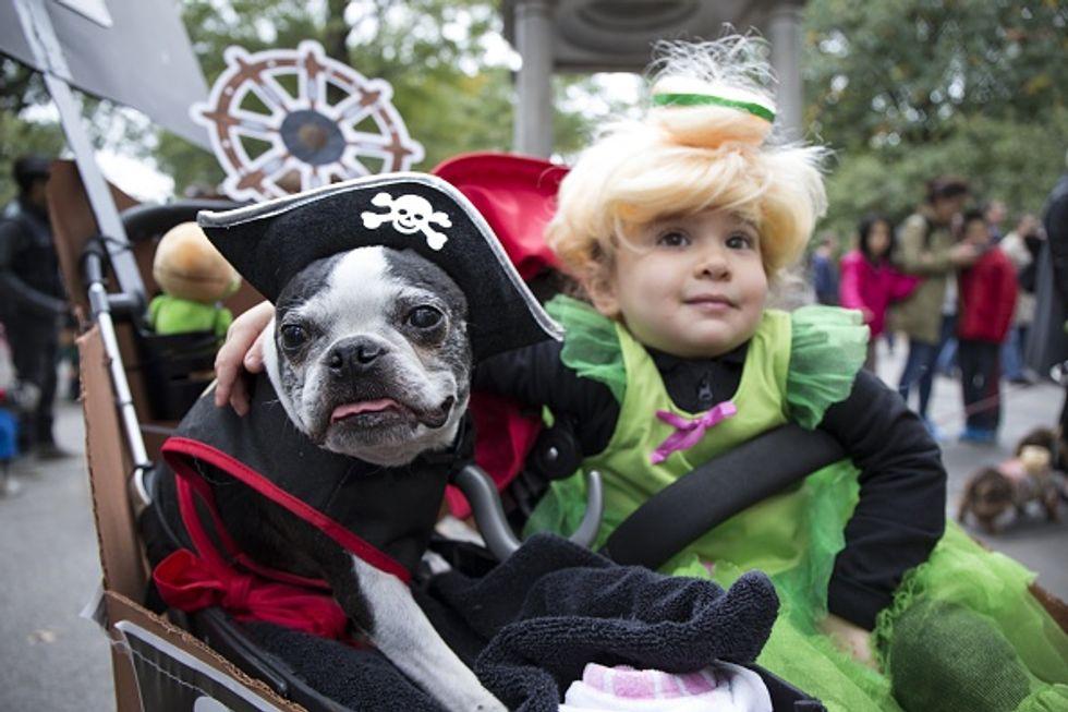 Halloween, anche gli animali in maschera